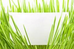 Erba verde con il biglietto da visita in bianco fotografia stock