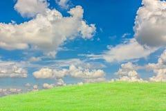Erba verde con il cielo luminoso. Immagine Stock Libera da Diritti