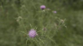 Erba verde con il fiore in Georgia vicino alla montagna video d archivio
