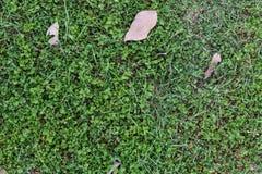 Erba verde con il fondo della foglia Immagini Stock