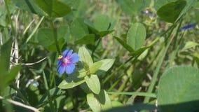 Erba verde con il piccolo fiore porpora Fotografia Stock Libera da Diritti