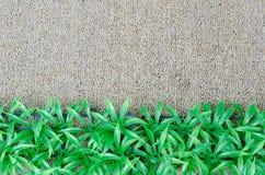 Tappeto di Grasswith Fotografia Stock