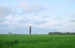 Erba verde con l'albero del coconout Immagine Stock Libera da Diritti