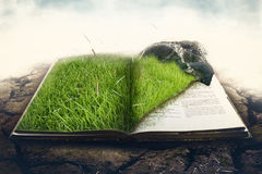 Erba verde con la pietra su un libro Immagine Stock