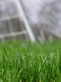 Erba verde con la rete di calcio Fotografia Stock