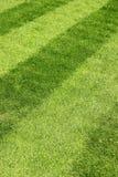 Erba verde con le bande Immagini Stock