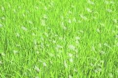 Erba verde con le bolle Immagine Stock