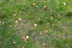 Erba verde con le foglie fotografia stock libera da diritti