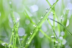 Erba verde con le gocce Fotografie Stock Libere da Diritti
