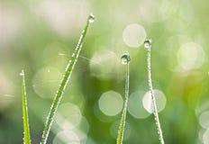 Erba verde con le gocce di acqua e un fondo del bokeh Fotografia Stock