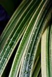 Erba verde con le gocce di pioggia Fotografia Stock Libera da Diritti