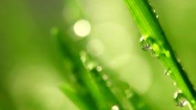 Erba verde con le gocce di pioggia stock footage
