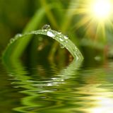 Erba verde con le gocce di pioggia Immagini Stock Libere da Diritti