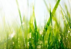 Erba verde con le gocce di rugiada Fotografie Stock Libere da Diritti