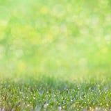 Erba verde con le gocce di rugiada - fondo defocused del bokeh Fotografia Stock