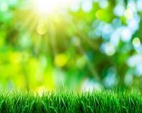 Erba verde con le viste di tramonto Fotografia Stock