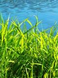 Erba verde con lo stagno immagini stock libere da diritti
