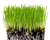 Erba verde con terra Immagini Stock