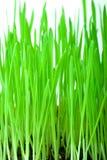 Erba verde con terra Fotografia Stock