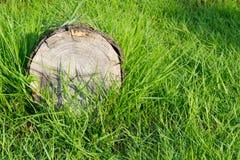 Erba verde con vecchio legname Fotografie Stock Libere da Diritti