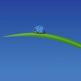Erba verde con waterdrop contro cielo blu Fotografie Stock