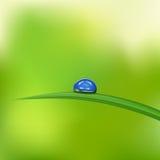 Erba verde con waterdrop contro cielo blu Fotografia Stock