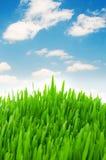 Erba verde contro il cielo Immagine Stock