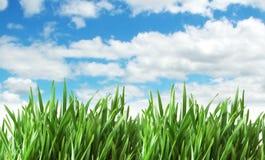 Erba verde contro il cielo Fotografie Stock Libere da Diritti