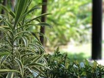 Erba verde-cupo Alberi di bellezza Immagini Stock Libere da Diritti