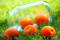 Erba verde del pomodoro del giardino giallo di estate Immagine Stock Libera da Diritti