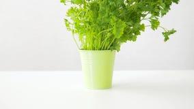 Erba verde del prezzemolo in vaso sulla tavola archivi video