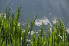 Erba verde dell'acqua blu del lago Fotografie Stock Libere da Diritti