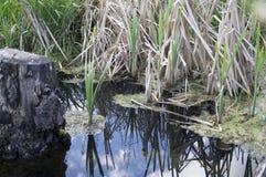 Erba verde dell'acqua blu del lago Immagini Stock