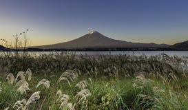 Erba verde della priorità alta con il fondo della montagna di Fujisan Immagine Stock