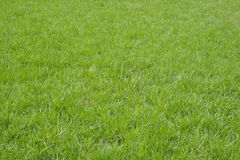 Erba verde della sorgente fotografia stock