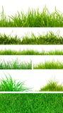 Erba verde della sorgente fresca. Fotografia Stock