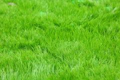 Erba verde della sorgente fresca fotografia stock