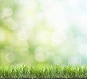Erba verde della sorgente fresca immagine stock