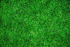 Erba verde della sorgente fresca Immagini Stock Libere da Diritti