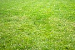 Erba verde della sorgente fresca fotografie stock