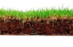 Erba verde della sorgente fresca con terreno. Fotografia Stock