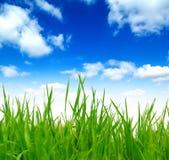 Erba verde della sorgente fresca sopra il cielo blu Fotografia Stock Libera da Diritti