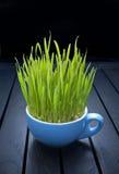 Erba verde della tazza Fotografie Stock