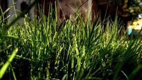 Erba verde di luce solare fotografia stock