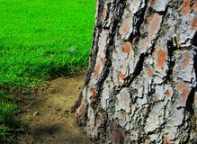 Erba verde di struttura del fondo di legno dell'albero Immagine Stock Libera da Diritti