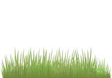 Erba verde di tonalità differente Immagine Stock