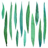 Erba verde dipinta a mano dell'acquerello Fotografie Stock Libere da Diritti