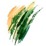 Erba verde dipinta a mano dell'acquerello Fotografia Stock