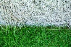 Erba verde e bianco Fotografie Stock Libere da Diritti