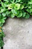 Erba verde e calcestruzzo freschi Immagine Stock
